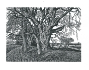 A Drove in Winter Howard Phipps wood engraving 4.5 x 6 inches £250 framed
