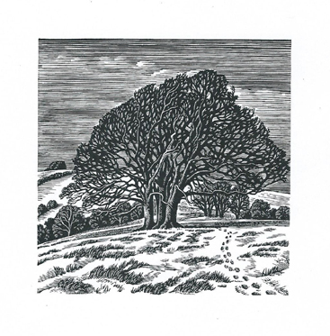 Downs in Winter Howard Phipps wood engraving 4 x 4inches £215 framed