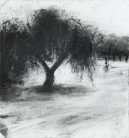 Orchard 2 30 x 28 cm charcoal on paper